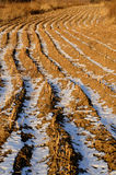 Field Landscapes in Winter Stock Images