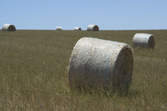 Field Hay Bales, Kings Beach, Fleurieu Peninsula, South Australi. Field of large round hay bales in a field situated at Kings Beach, Victor Harbor, Fleurieu Royalty Free Stock Photos