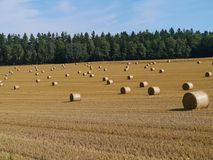 Field with large round straw bales Royalty Free Stock Images