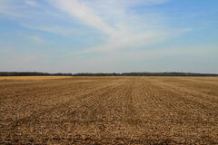 Field in Late Winter. A corn field in late Winter royalty free stock photo