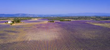 Field of lavender. Aerial view royalty free stock images