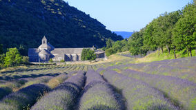 Field of lavender in front of Abbey stock photo
