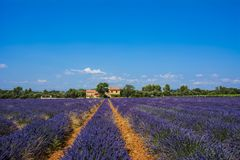 Field of lavender. Houses on the horizon. Blue sky with clouds royalty free stock images