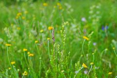 Field lay flowers summer day. flower background. Field lay flowers summer day. floral background. the green vegetation of the countryside royalty free stock photo