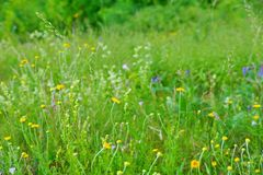 Field lay flowers summer day. flower background. Field lay flowers summer day. floral background. the green vegetation of the countryside royalty free stock photography
