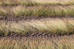 Field of linen Stock Image