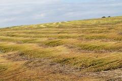 Field of linen Stock Photo