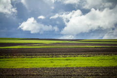 Field lines. The colours and the light were great. Shot taken from a moving vehicle Royalty Free Stock Photos