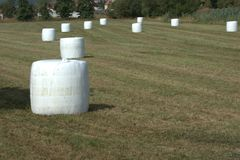 Field littered with bales of hay silage wrapped in foil. Waiting to get picked up and used as feed for agricultural animals Stock Photo