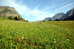 Field at Logan's Pass. Field of wildflowers at Glacier National Park's Logan's pass with blue sky stock photos