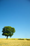 Field and lonely tree Royalty Free Stock Image