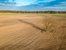 Spring arable land. A field and a lonely tree. View from above. Aerial, drone. A field and a lonely tree. Spring arable land.  View from above Royalty Free Stock Photos