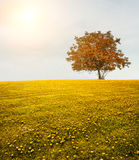 Field. Lonely tree on the spring meadow Royalty Free Stock Photos