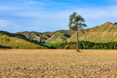 Field with lonely tree in Whanganui National Park, New Zealand Stock Photo