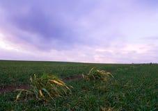 Field in long exposure Stock Image