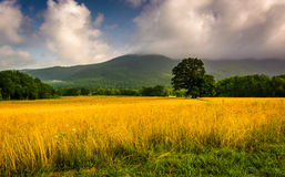 Field and low clouds over mountains at Cade's Cove, Great Smoky Stock Images