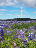 Field of lupine with wind farm in the background Stock Photo