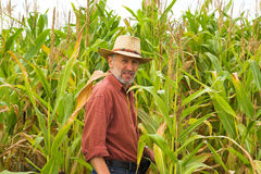 On the field of maize Royalty Free Stock Photo