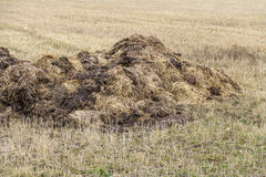 Field with manure heap Royalty Free Stock Photo