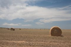 Field with many hay rolls. Field with many hay rolls with one in foreground Royalty Free Stock Images