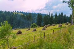 A field with many haystacks that dry out in the sun Royalty Free Stock Photos