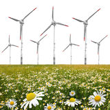 Field of marguerites with wind turbines Royalty Free Stock Images