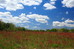 Field at mckeown bridge park in Barry County MI stock photography