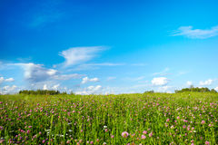 Field with meadow flowers Royalty Free Stock Photography