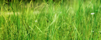 Field Meadow Fresh Grass Sunny Weather Stock Photography