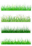 Field and meadow grass patterns. Field and meadow grass elements and patterns isolated on white background Royalty Free Stock Photography
