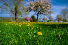 Field, Meadow, Grassland, Ecosystem stock images