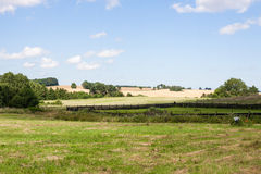 Field and meadow Stock Photography