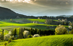 Field and meadow Royalty Free Stock Image
