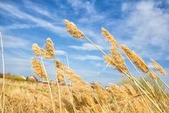 Field med högt gräs Royaltyfria Foton