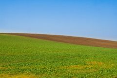 Field minimal. Autumn countryside, fresh corn field Stock Images