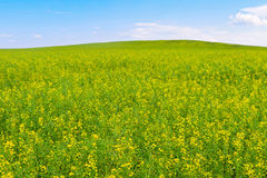 Field in minimal style Stock Photo