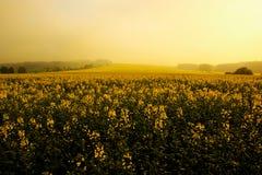 field morgonen Arkivbild