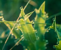 Field in morning dew Royalty Free Stock Photography