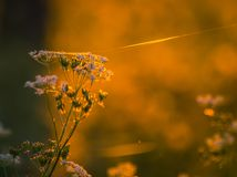 Field in morning dew Royalty Free Stock Photo