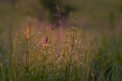 Field in morning dew Stock Image