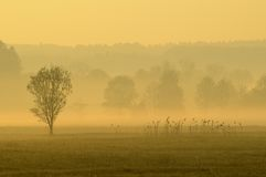 Field in morning mist Royalty Free Stock Photos