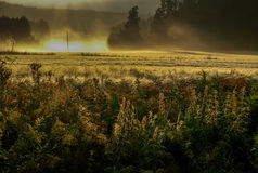 Field in the morning sun. Crop-field from Finland, mid-summer Royalty Free Stock Images
