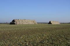 Field. Mound sheaves on winter field Stock Image
