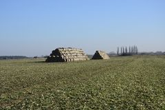 Field. Mound sheaves on winter field Royalty Free Stock Photo