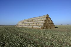 Field. Mound sheaves on winter field royalty free stock photography