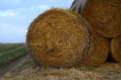 Field. Mound sheaves on winter field royalty free stock images