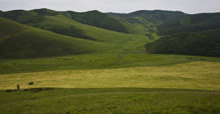 Field in the mountains Royalty Free Stock Images