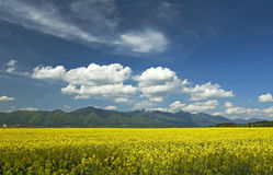 Field and mountains. Yellow field with mountains and blue sky Royalty Free Stock Photography