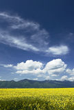 Field and mountains Royalty Free Stock Photography