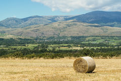 Field and mountains Stock Image